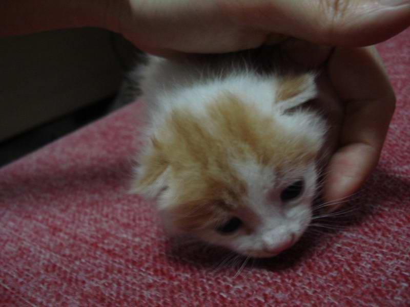 这个没睁眼的小猫真可爱.